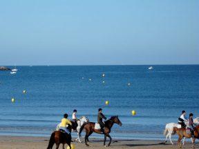 Plage avec chevaux ile de Ré - Maison de l'océan